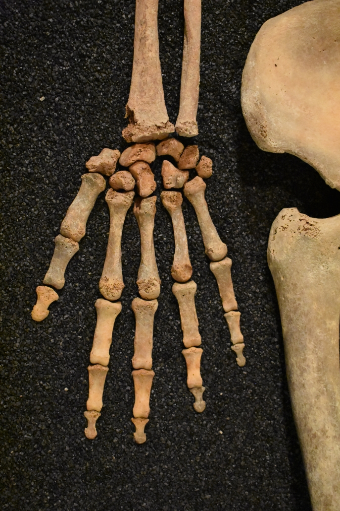 Hand from one of the exhibition's skeletons