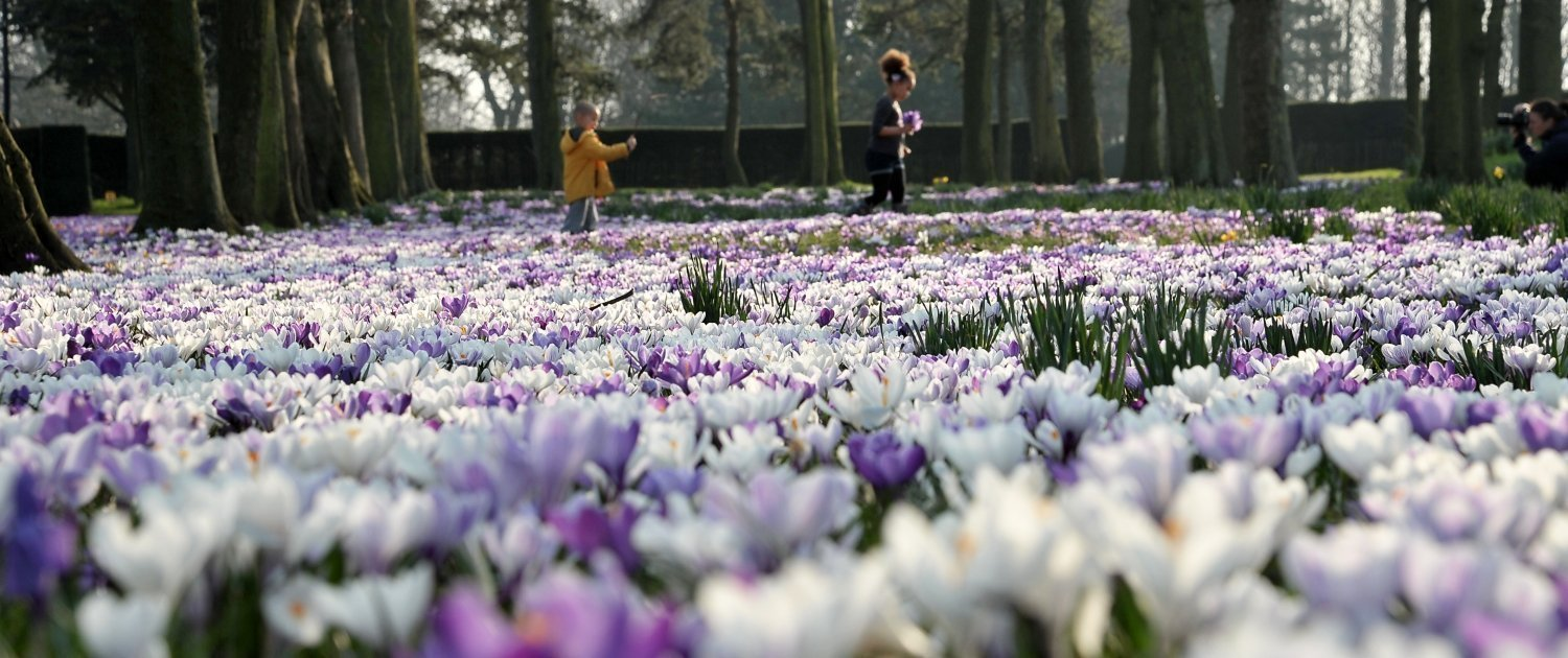 Two children walking through a field of purple and white flowers