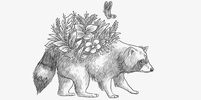 A sketch of a racoon with a plant growing on its back